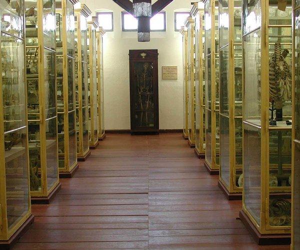 Meckelsche Sammlung