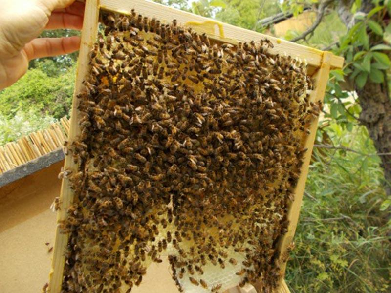 Bienenkulturgarten in Halle